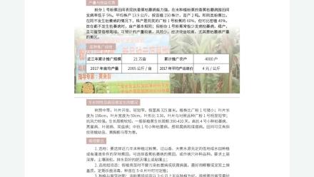 广东省农业农村厅-2019年农业主导品种:粉杂1号粉蕉